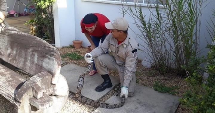 Cobra é encontrada debaixo de varal em residência de Sinop (MT)