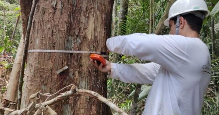 Concessão florestal é uma das soluções para combater o desmatamento ilegal no país